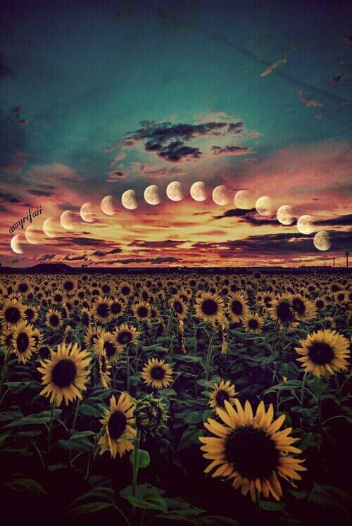 Sunflower Iphone Wallpaper Reggae Tumblr Buscar Con Google Wallpapers Pinterest