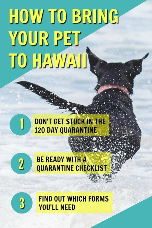 How To Bring Your Pet To Hawaii