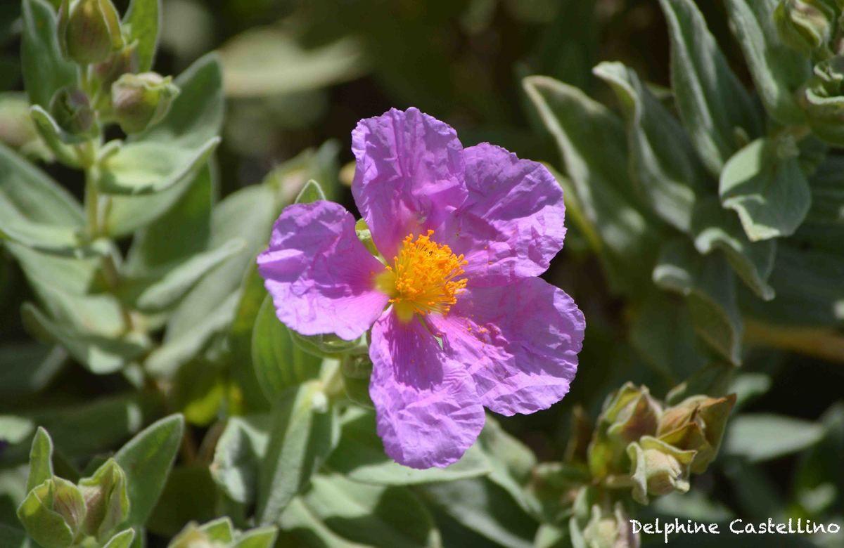 Fleurs - Les photographies de Delphine Castellino