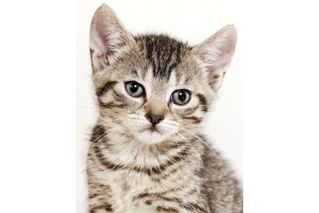 Fein Süße Baby Katze Malvorlagen Fotos - Malvorlagen-Ideen ...