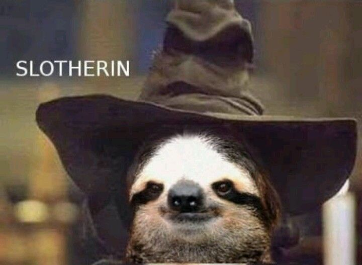 Sloth jokes are the highest form of humour