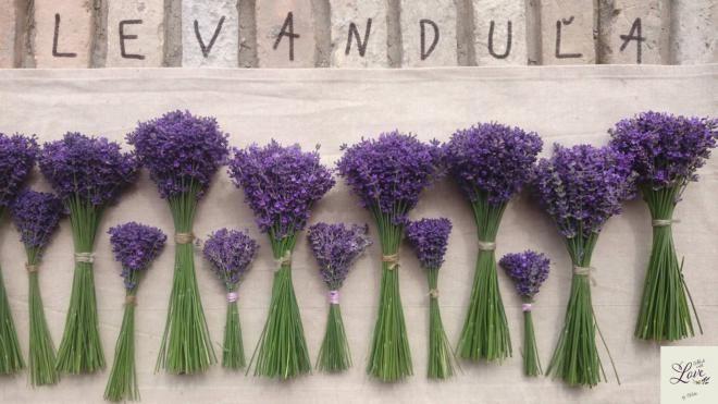 Levanduľová záhrada I.časť - overené rady pri pestovaní, tipy na levanduľové výrobky, recepty a kytice / Veldi » SAShE.sk - slovenský handmade dizajn