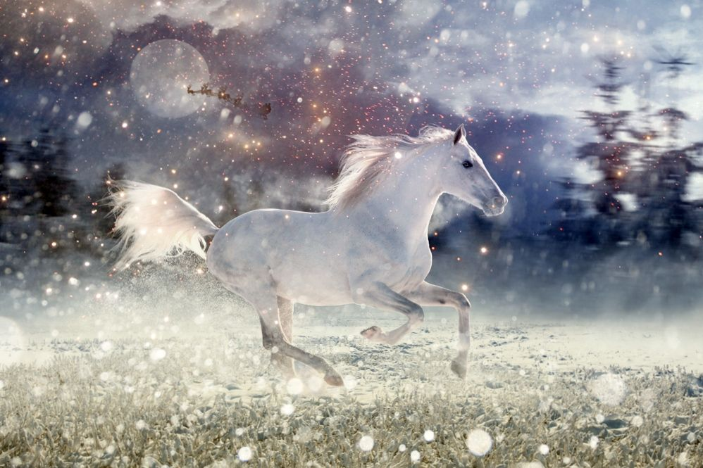 gray horse christmas - Google Search | Animals | Pinterest