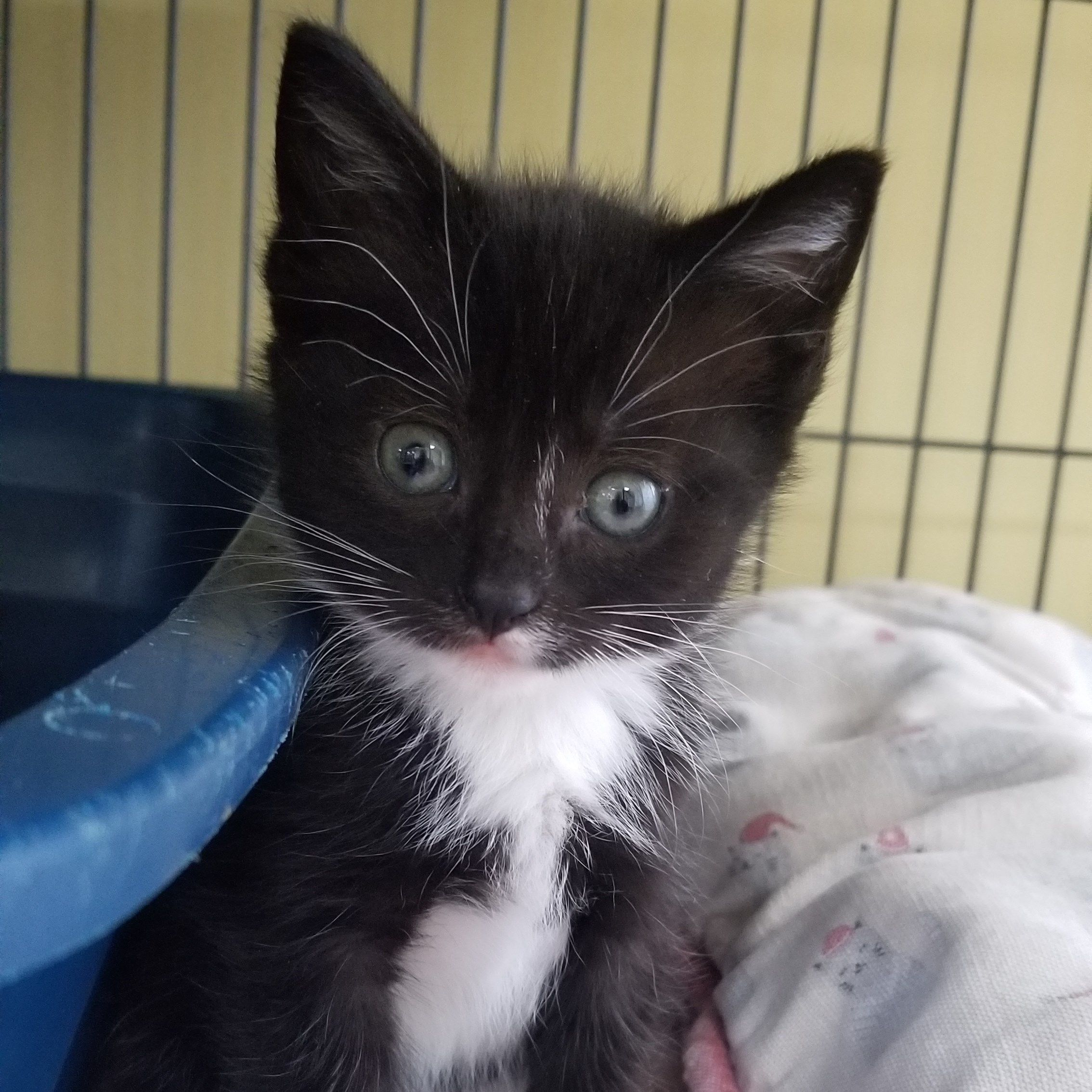 Adopt Emily on Cat behavior, Cat allergies, Cats