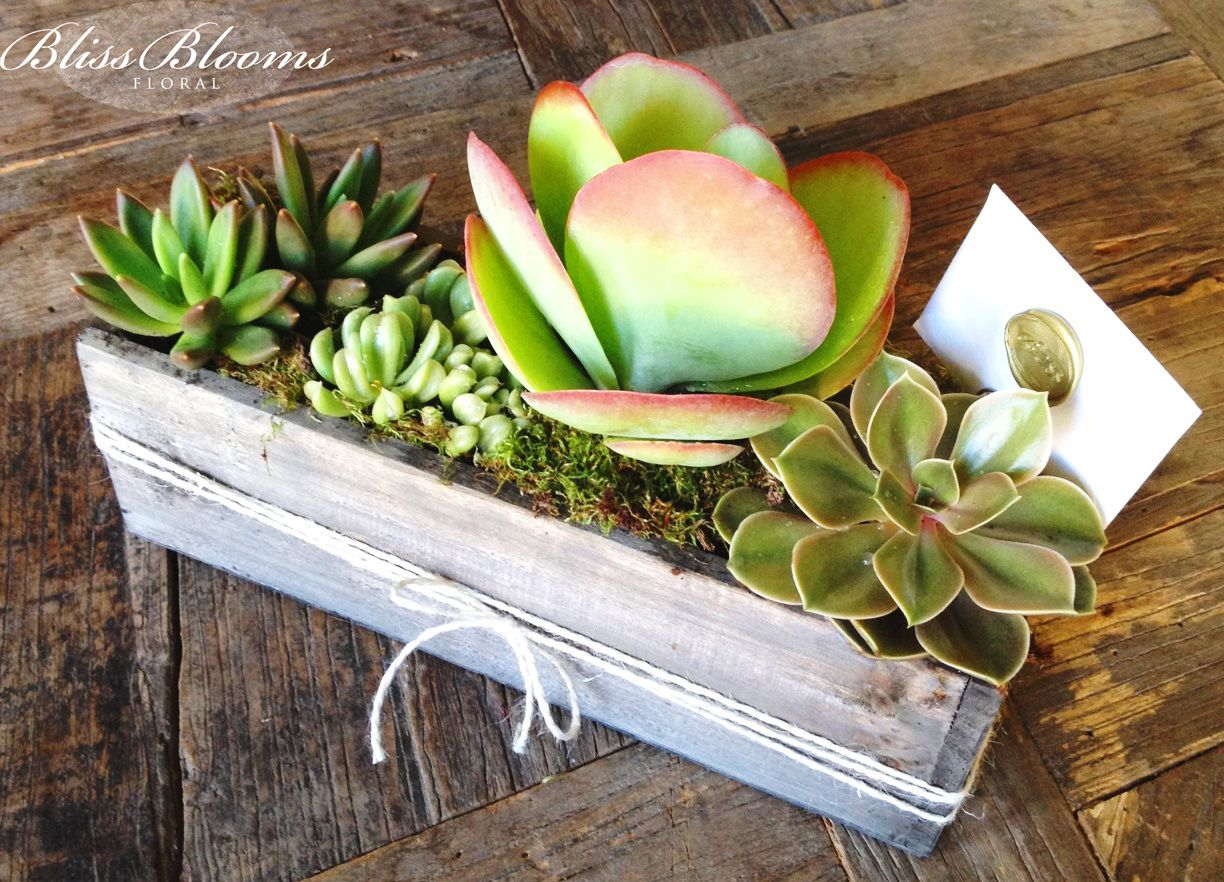 Succulent Plant Arrangements Containers | lots of interesting containers and the most beautiful succulent plants ...