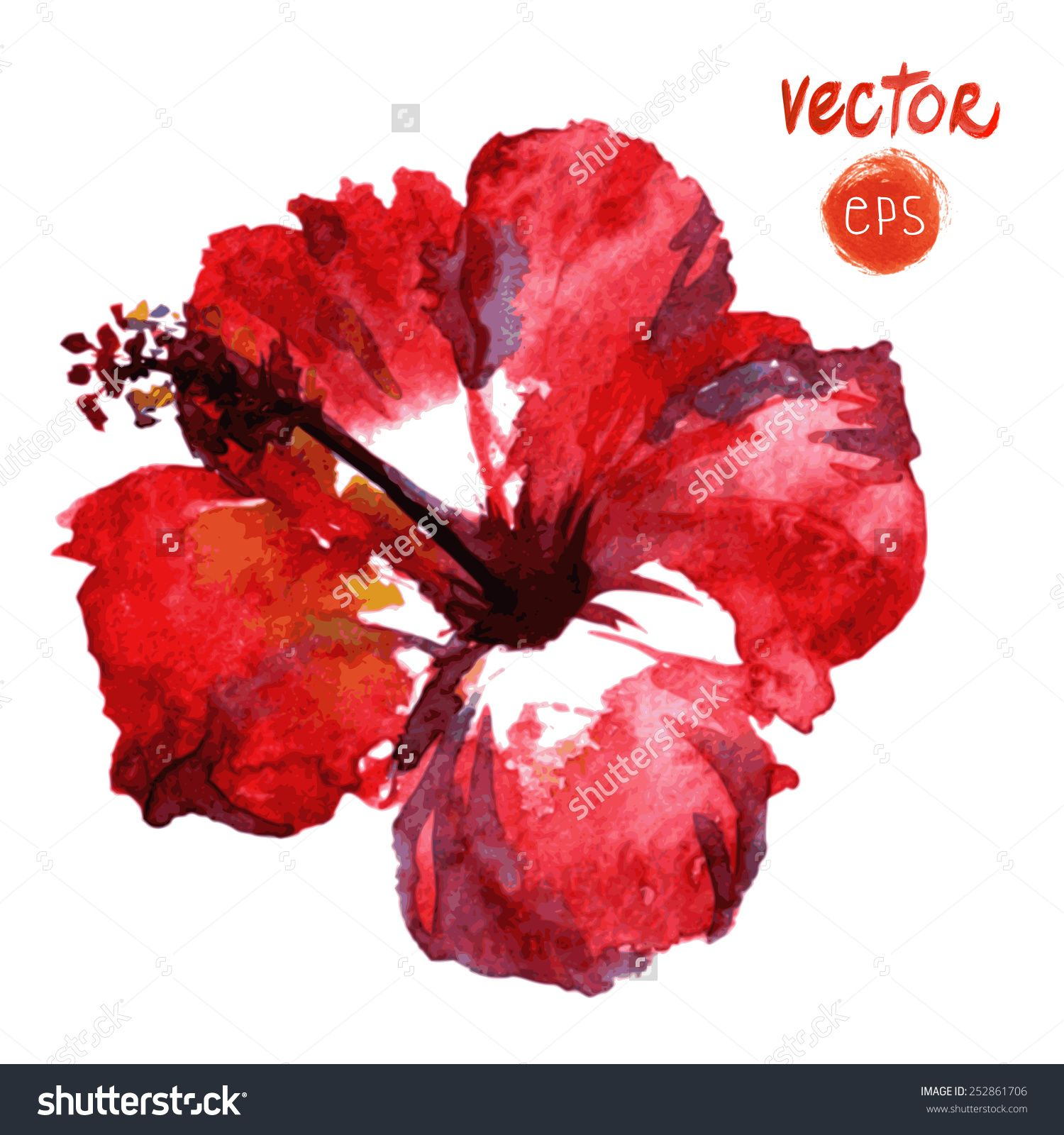 Red hibiscus flower watercolor google create pinterest red hibiscus flower watercolor google izmirmasajfo