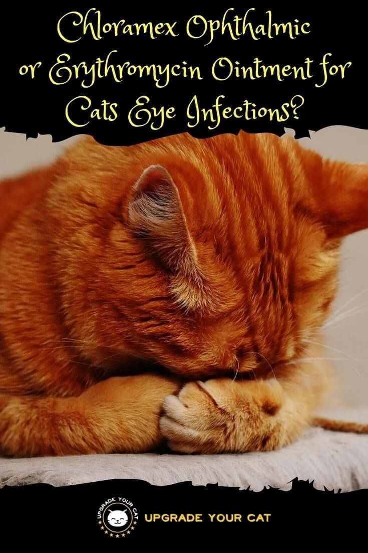 Chloramex Ophthalmic Ointment for Cats Eye Infections or