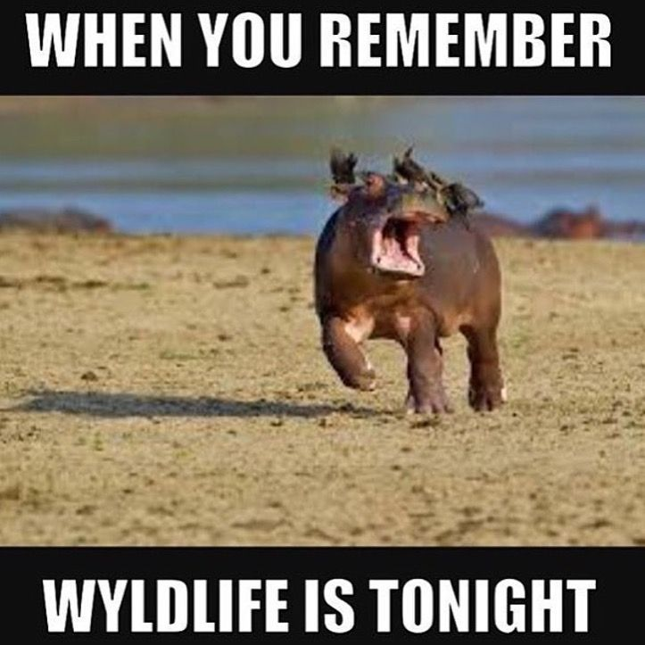 Pin By Robb Schreiber On A Young Life Wyldlife Meme Pics Yl Club Ideas Instagram Posts Young Life Meme Pictures Life