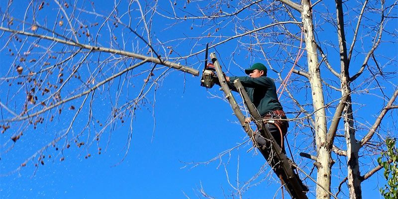 5 Tips For Choosing A Good Arborist House Home Ideas 5 Tips For Choosing A Good Arborist House Home Ideas Tree Service Green Lawn Care Lawn Care Tips