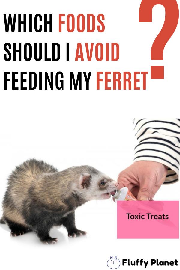 Foods I Should Avoid Feeding My Ferret Ferret Ferrets Care Pet Ferret