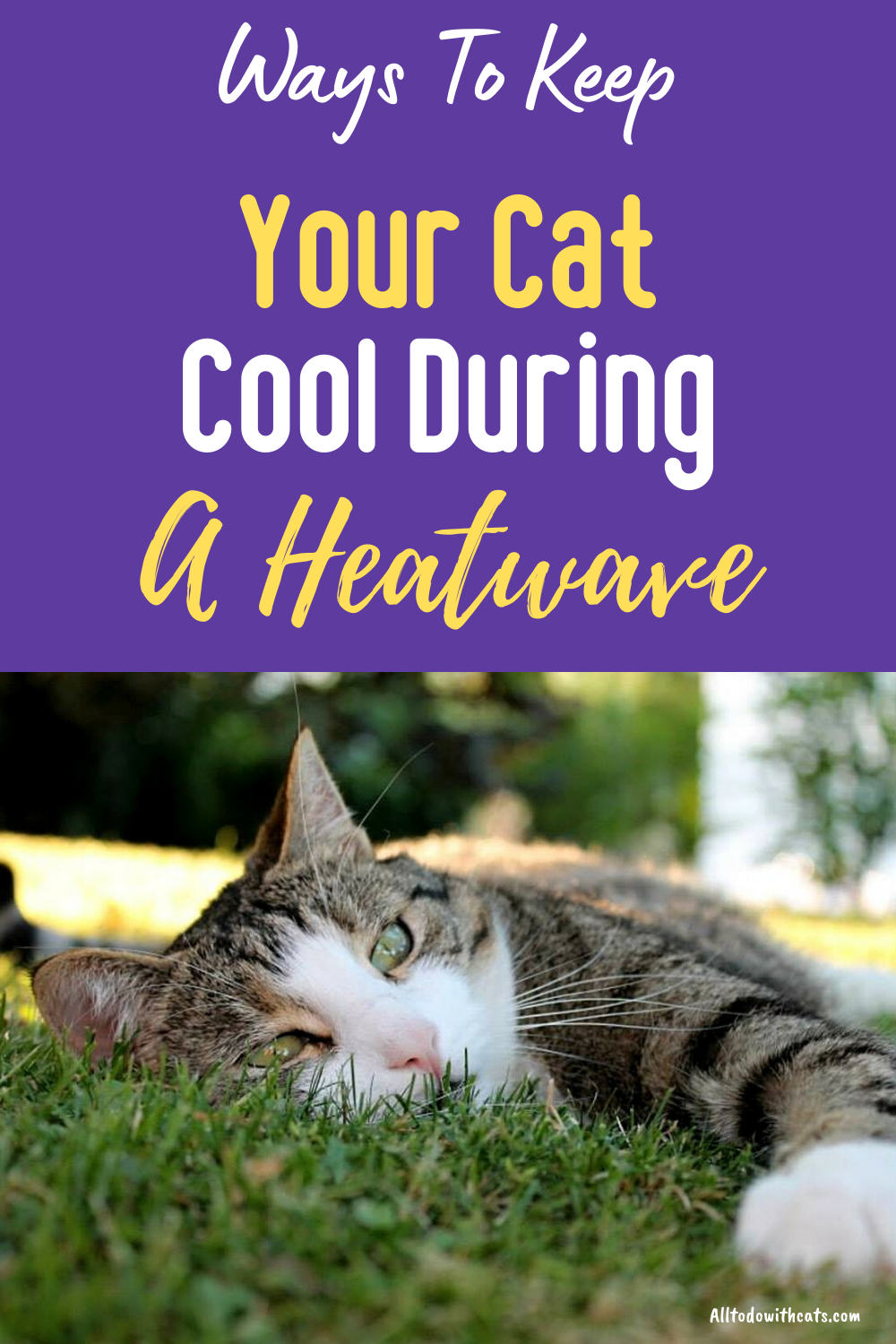 How To Keep Cats Cool In Hot Weather Even On The Hottest Day In 2020 Cat Cold Cat Care Tips Cats