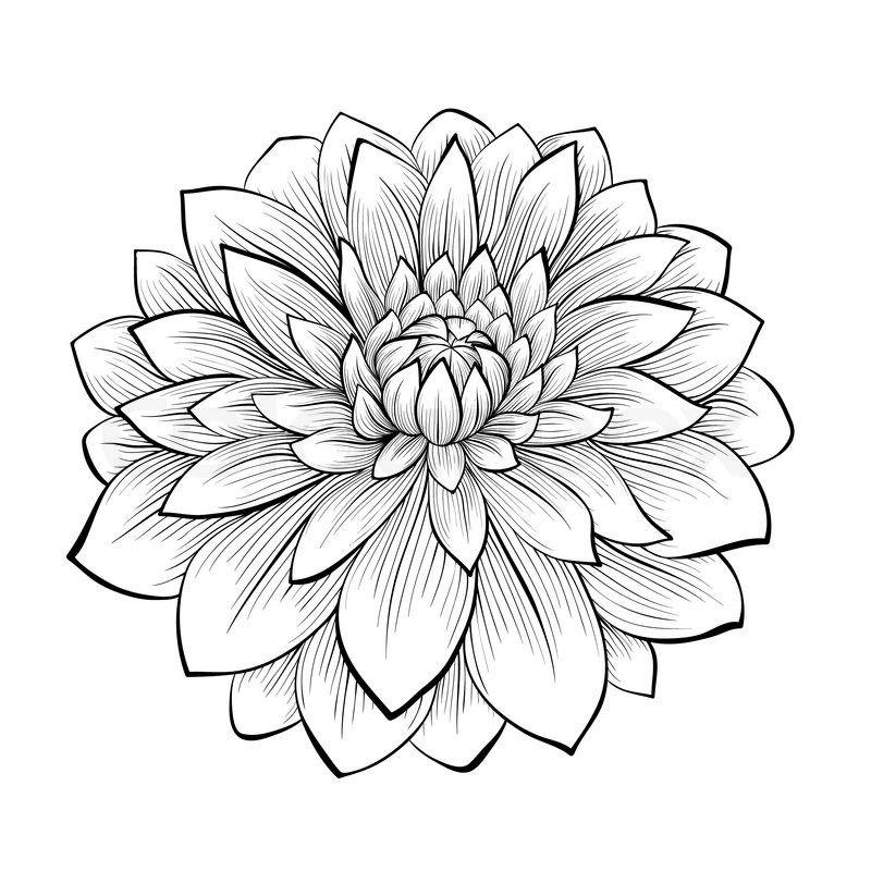 Pin By Urdu Skill On Textile Design Dahlia Flower Tattoos Flower Tattoo Dahlia Tattoo