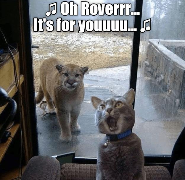 Say Hello To My Little Friend Karen Memes Funny Cat Memes Funny Mom Memes