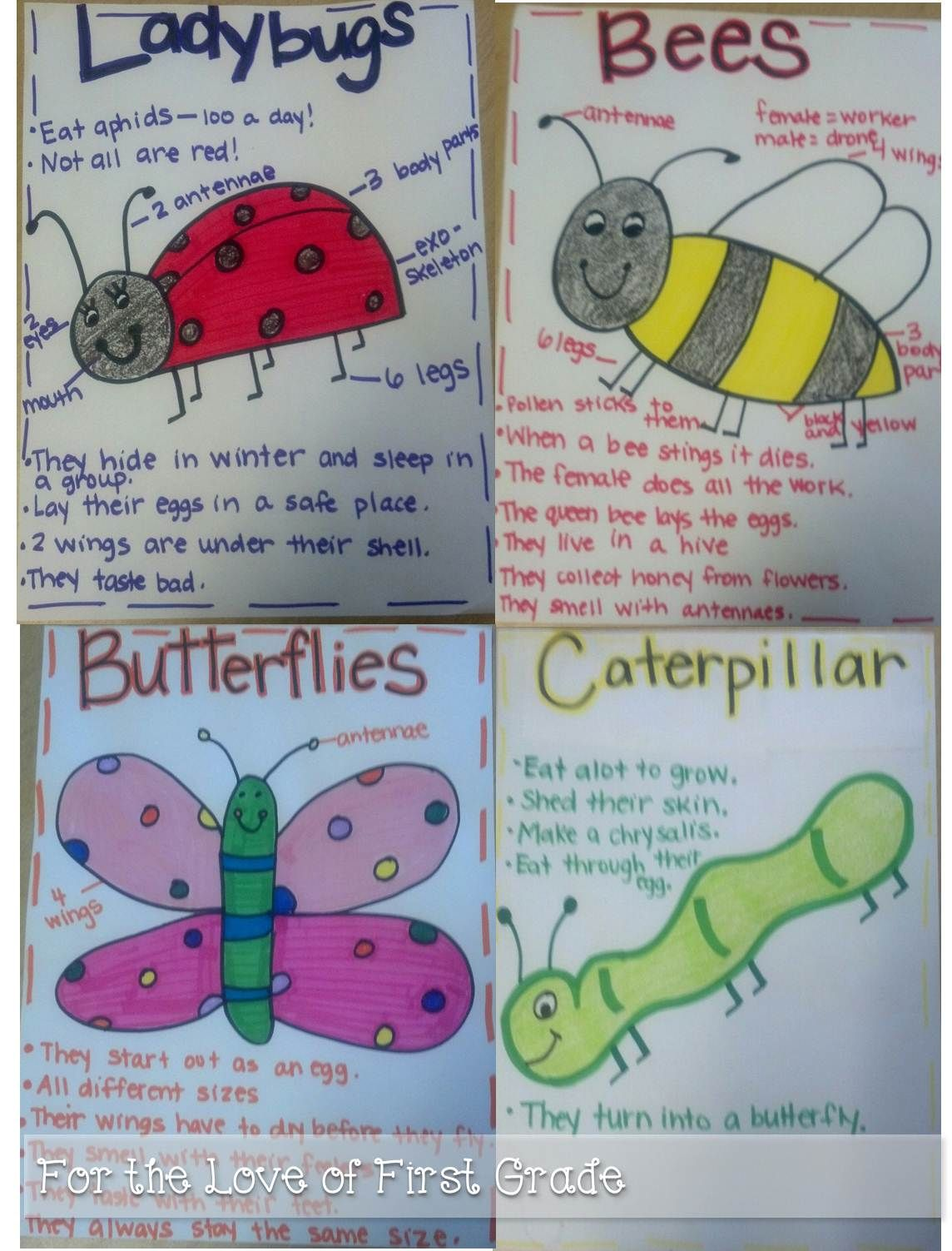 For The Love Of First Grade Insects