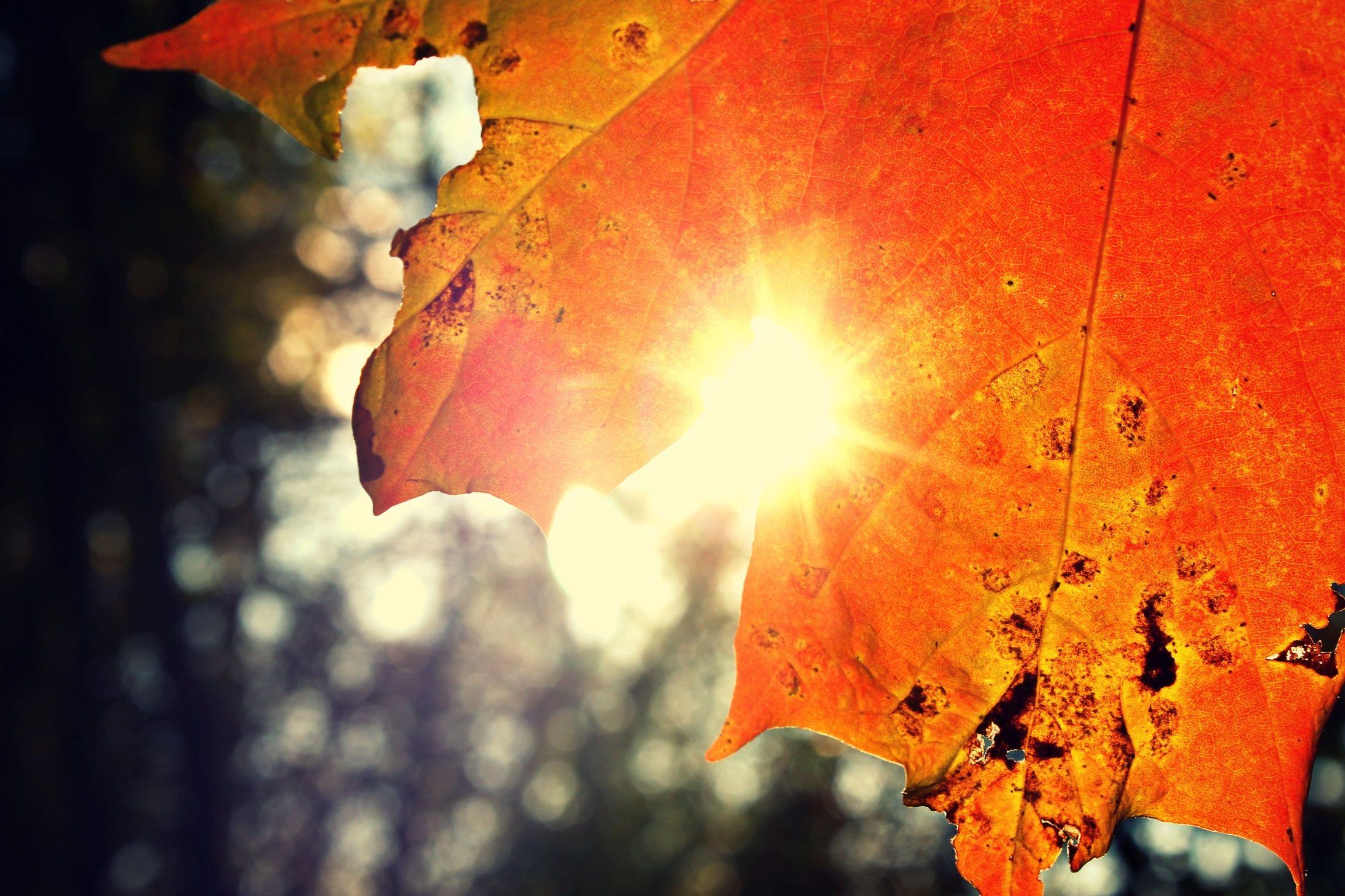 Sunset leaf