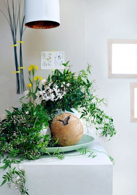 the 8 plants you should put in your bedroom to have a