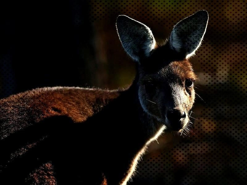 are being warned not to feed the animals Kangaroos, specifically, at a psychiatric hospital ... -P