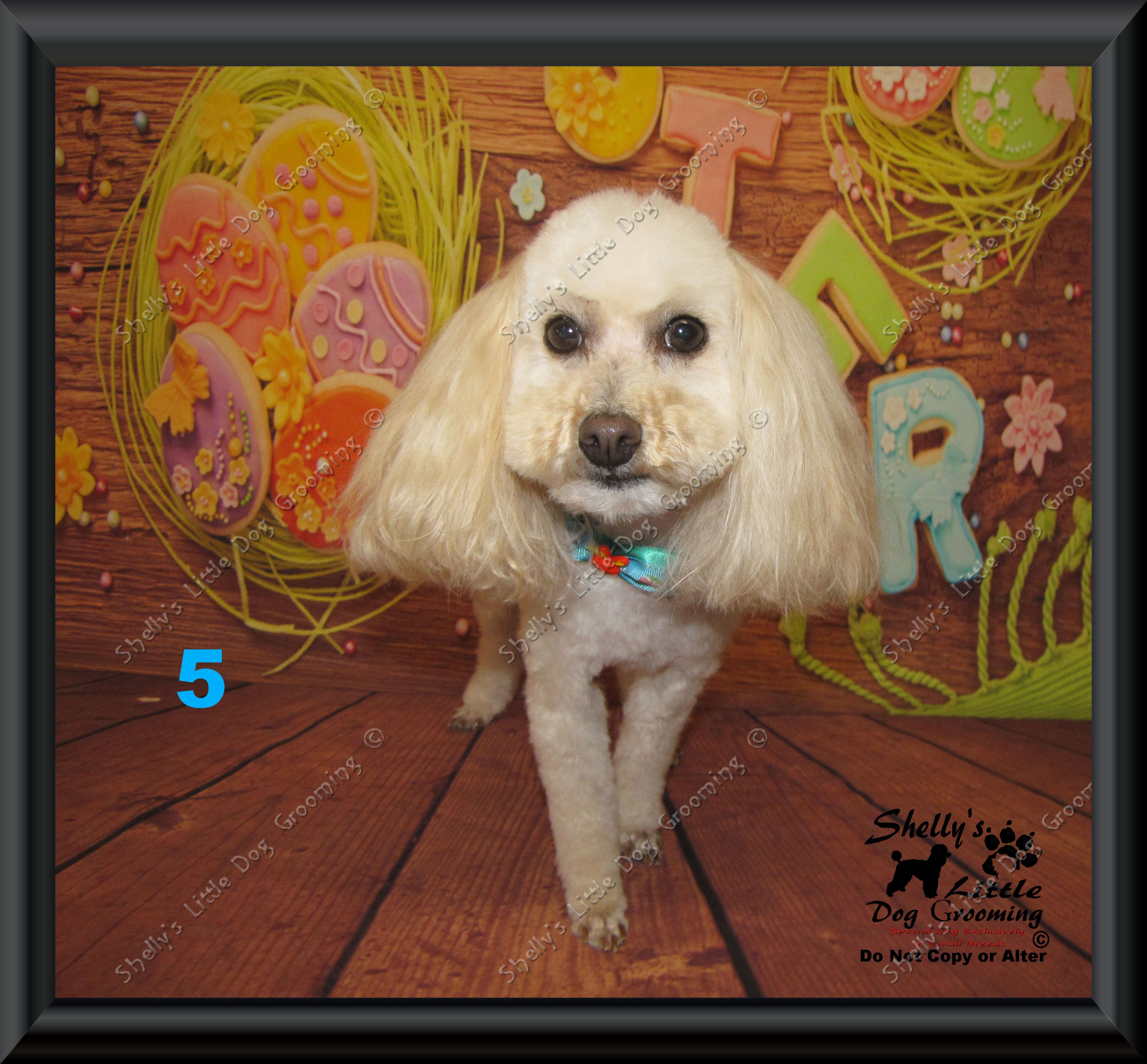 Pin By Shelly S Little Dog Grooming On 2019 Shelly S Little Dog