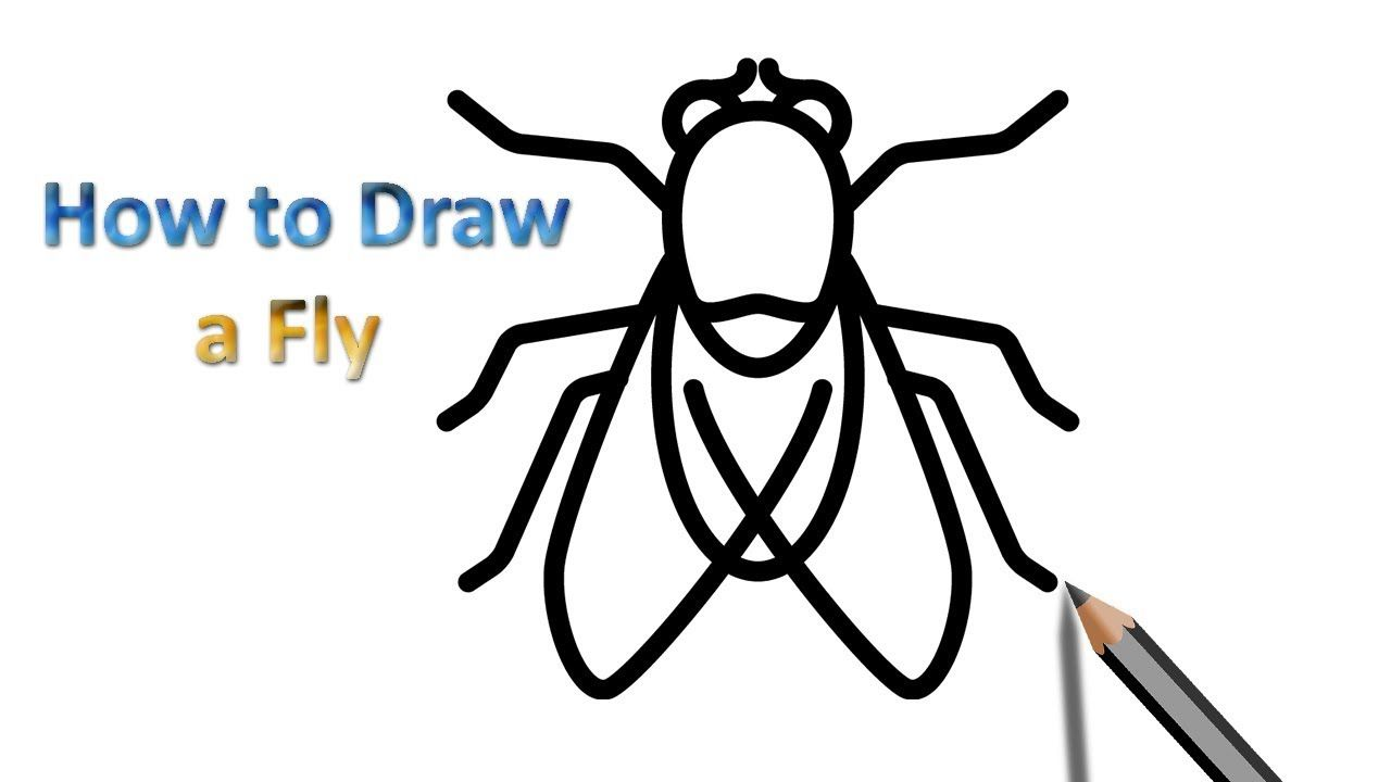 Fly Drawing Fly Drawing Drawings Step By Step Drawing