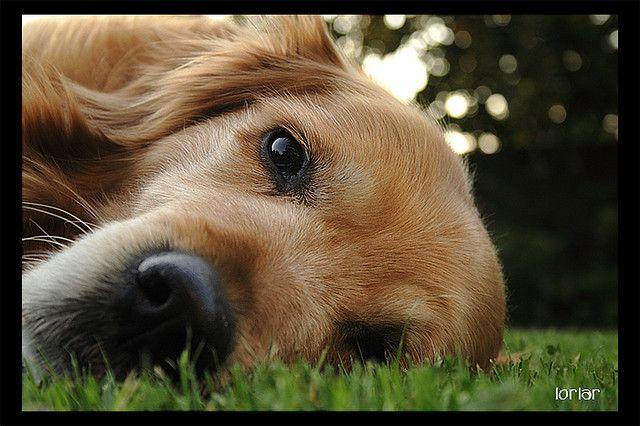 Cuddly glance...