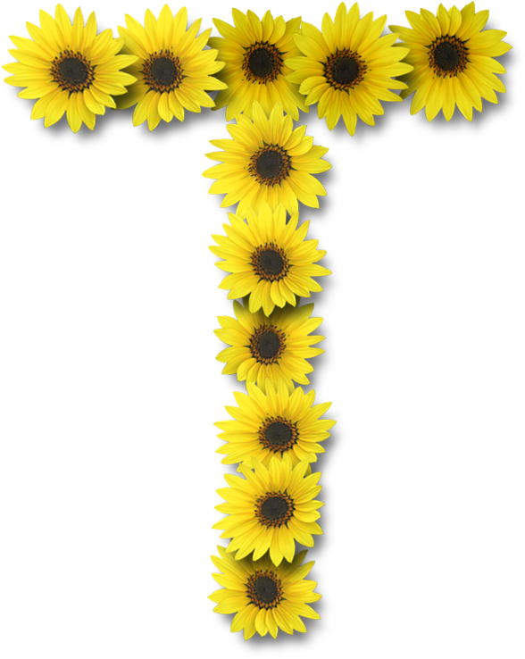 Alfabeto sunflowers ..... | Arte girassol, Margaridas ...