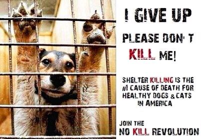 No Kill Animal Shelters But No Kill Animal Shelter Animal Shelter Animals