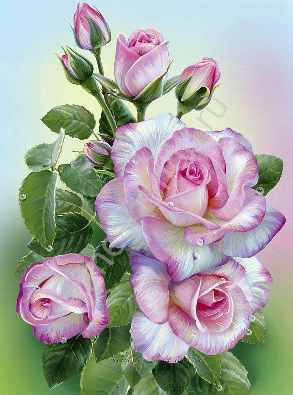 Бело-пурпурные розы, картина раскраска по номерам, на ...
