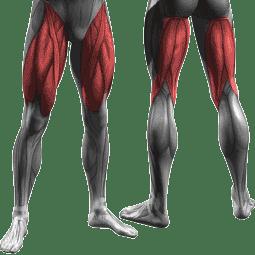 جدول تمارين كمال الاجسام 5 ايام و نظام غذائي لتضخيم العضلات Workout Routine For Men Arnold Schwarzenegger Workout Workout Schedule