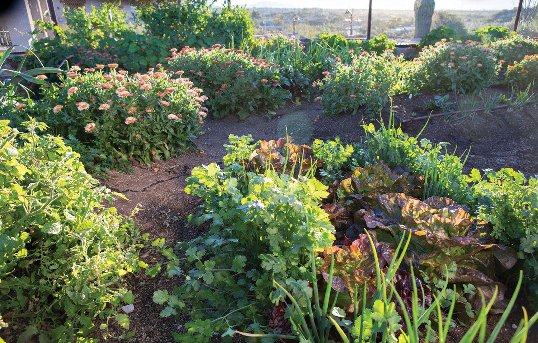 c9b2ddfef3b237d32615238c9b4b3625 - Vegetable Gardening In The Desert Southwest