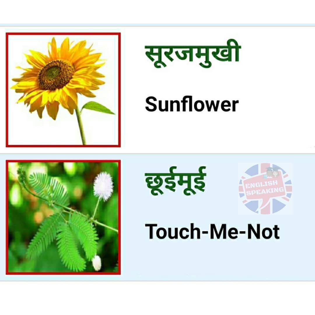 Pin By Rinku Singh On English Speaking In