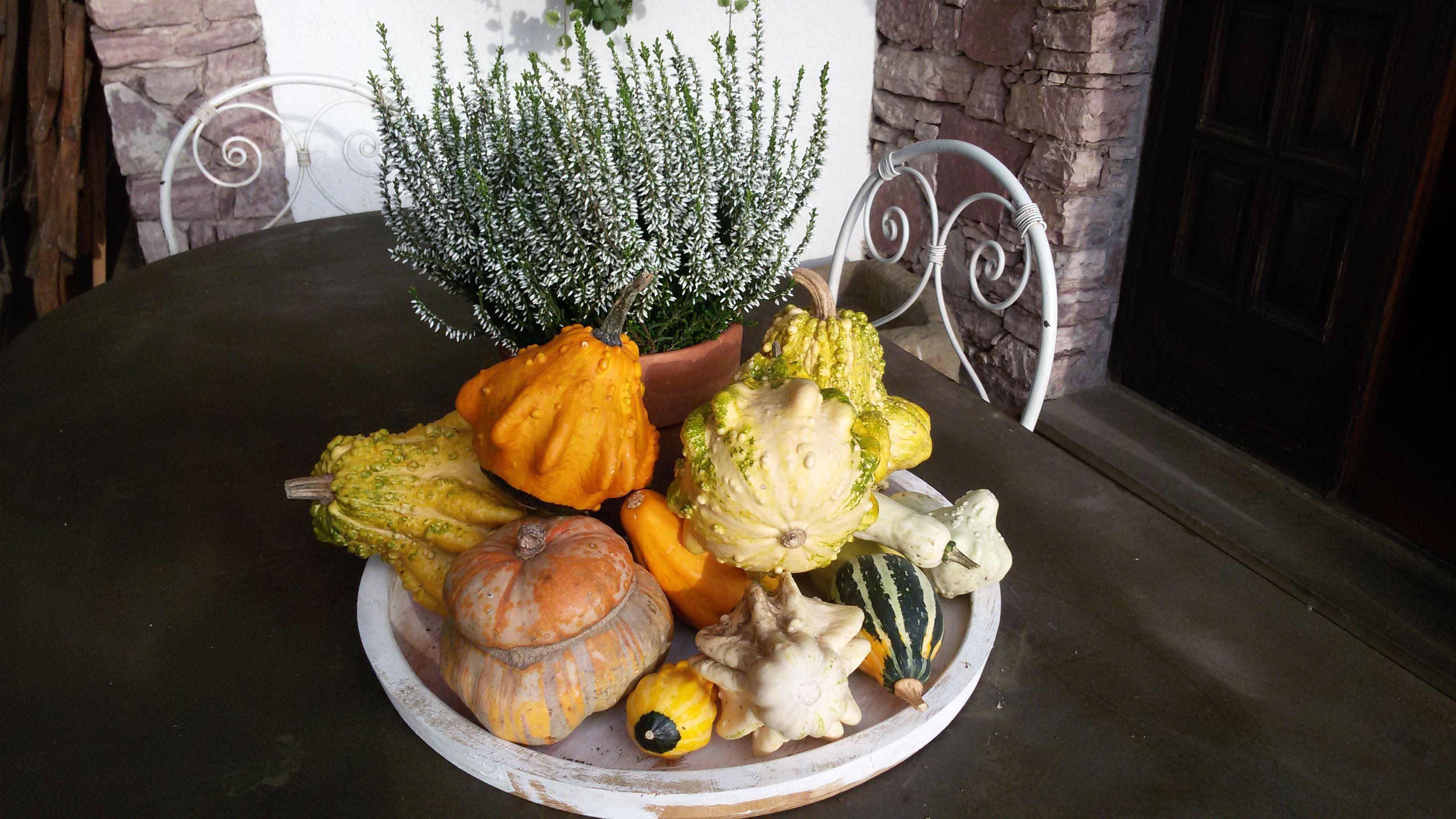 le zucche del mio orto (con immagini) Zucche, Orto, Autunno