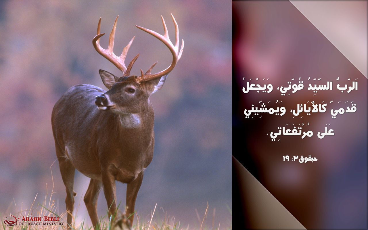 Pin On Free Arabic Calligraphies