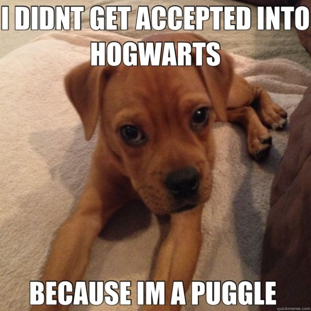 17 Dogs that Love Harry Potter More Than You (that's NOT a puggle though.