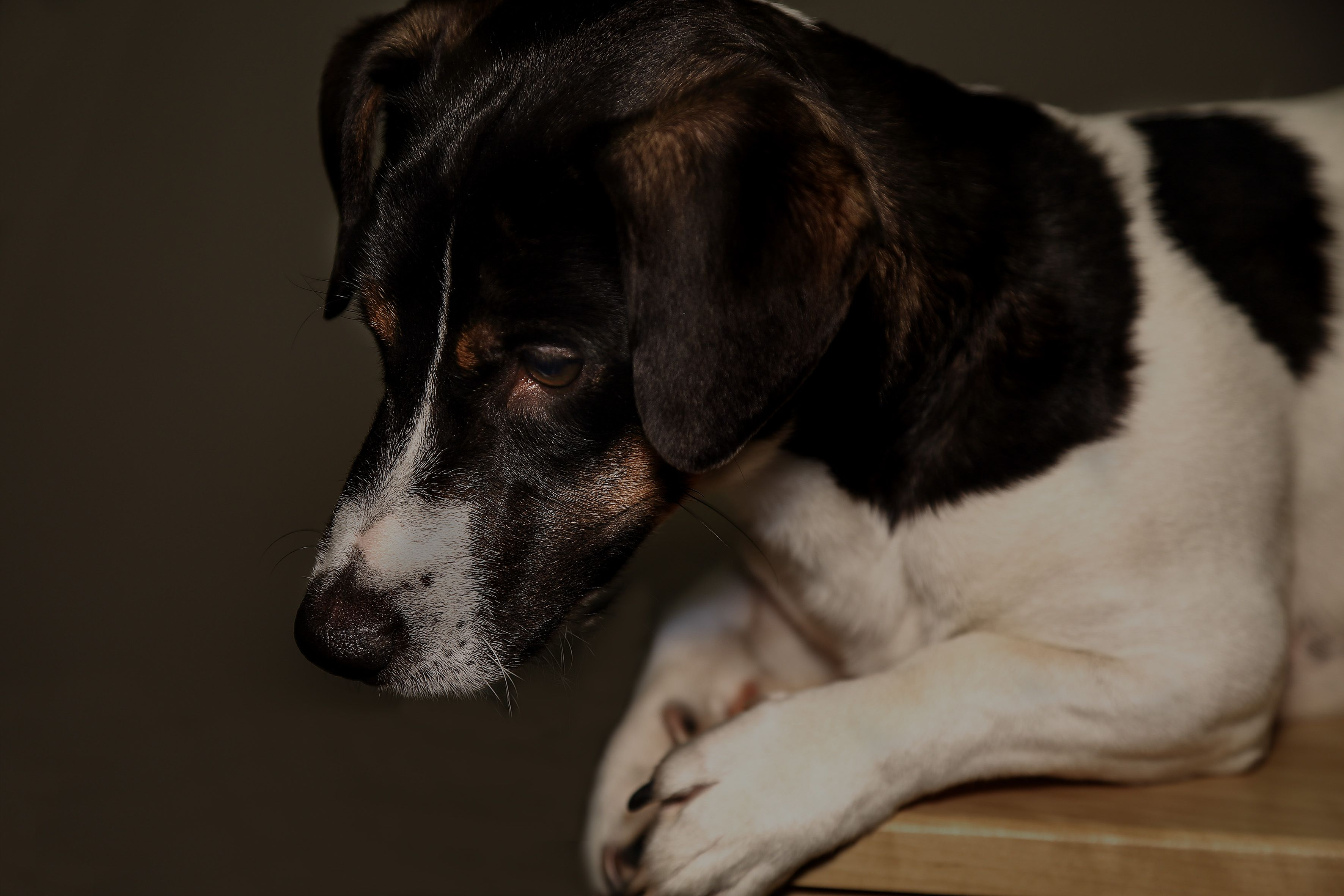 fotografia perro mascota Mascotas Pinterest