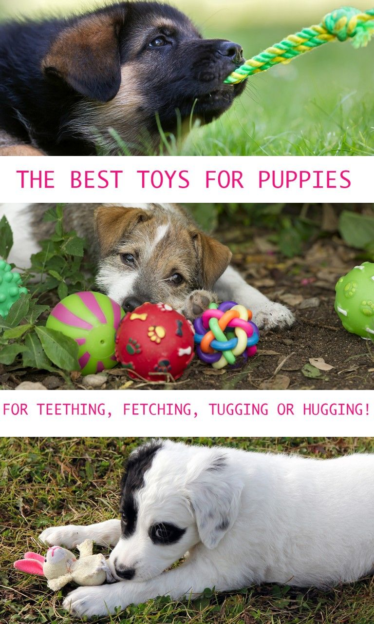 Puppy Toys The Best Dog Toys For Puppies Best Dog Toys Puppy