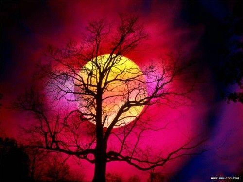 I love trees....