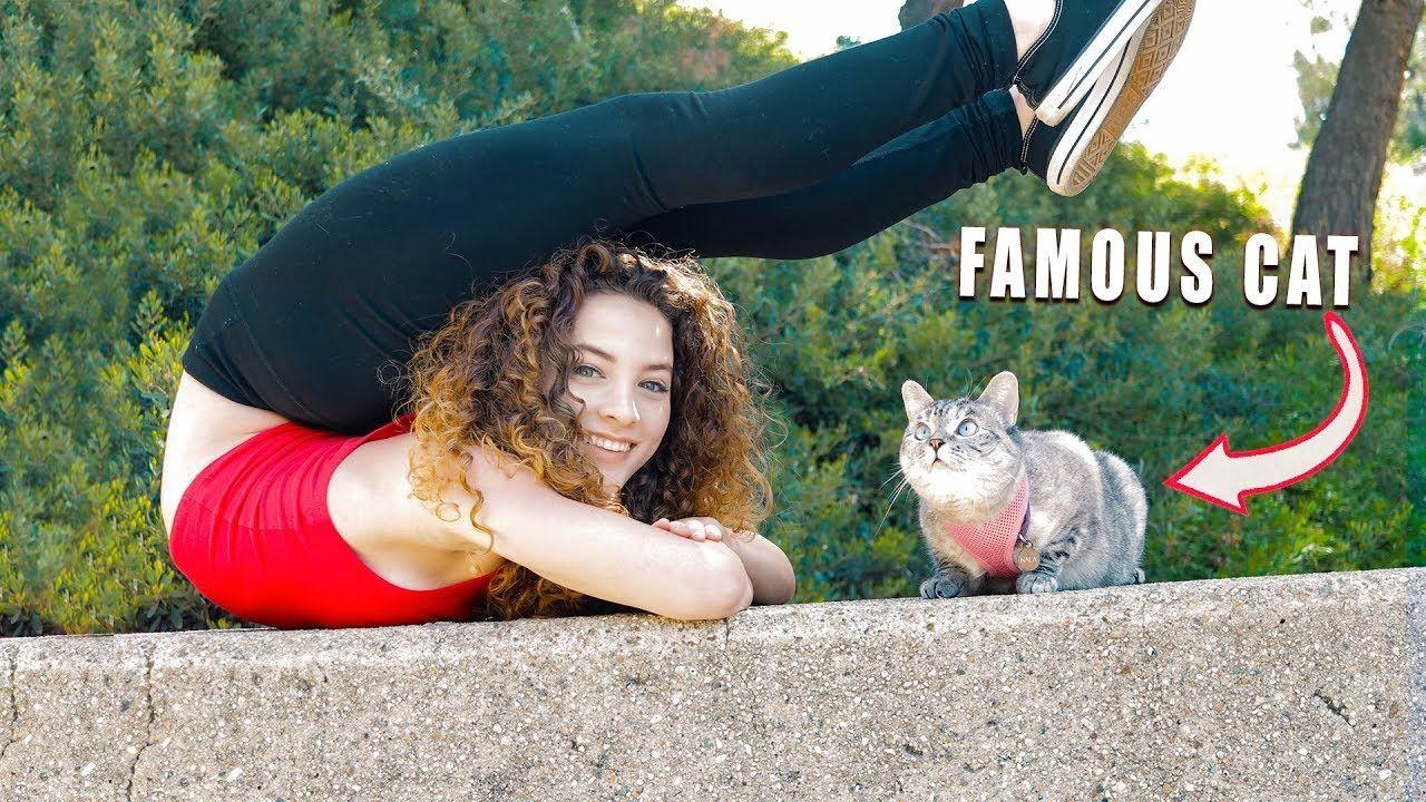 I Got A Cat Nala Cat Super Funny Cute Kitten Gif Sofie Dossi