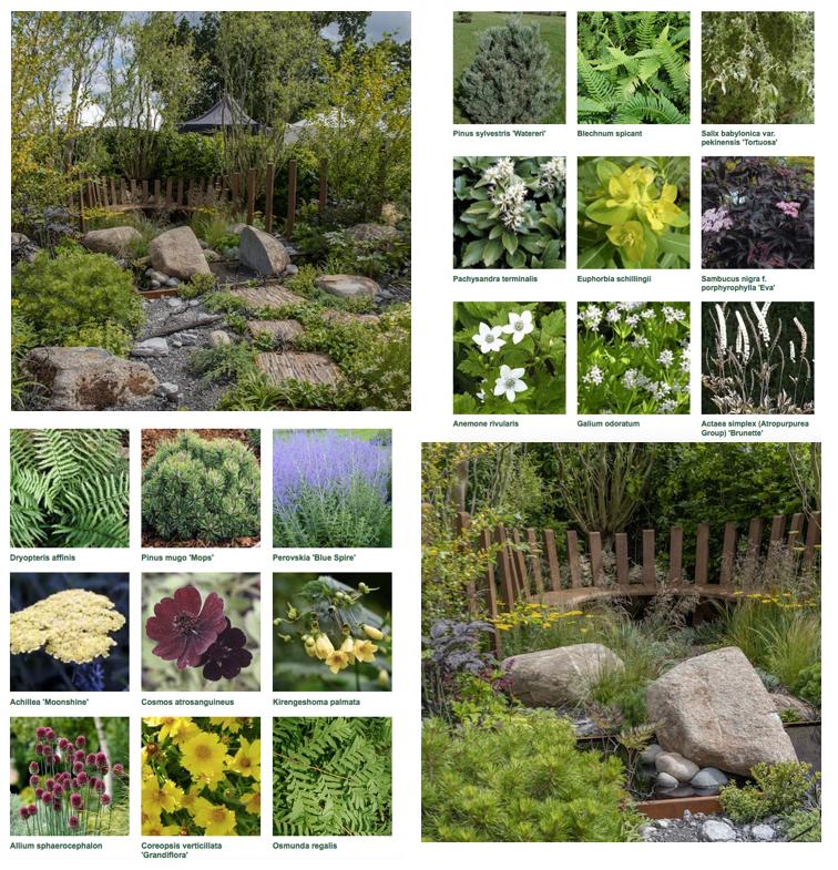 Through Your Eyes Garden With Plant List By Garden Designer
