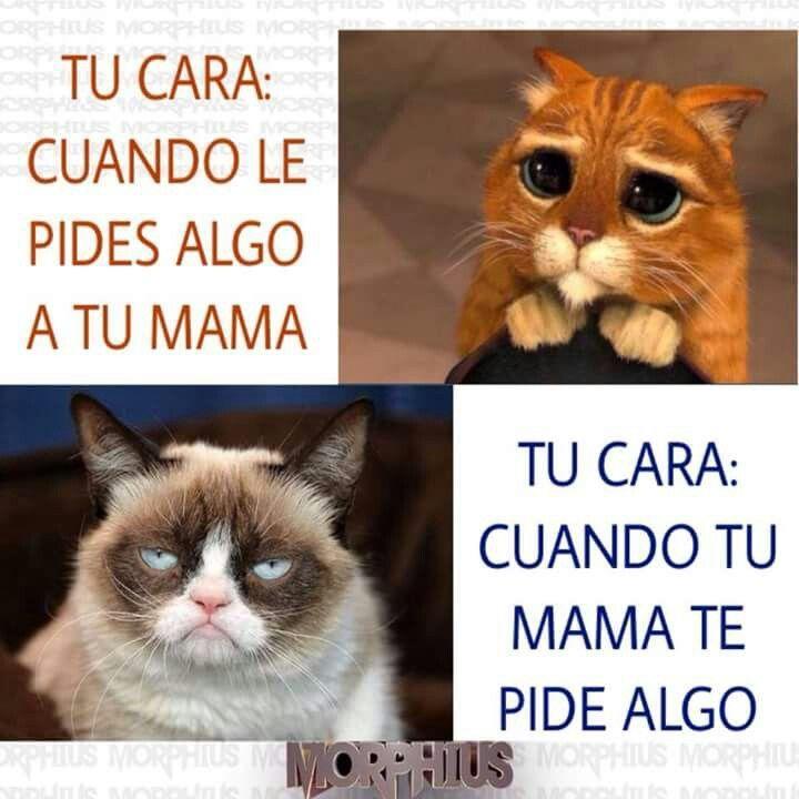 De Hecho Funny Spanish Memes Funny Memes Humor