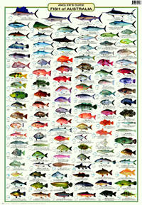 Anglers guide fish of australia fish australia and for Tropical fish temperature chart