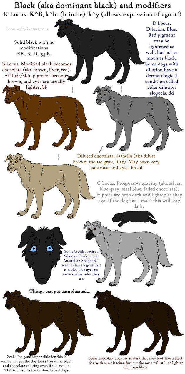 Dog Colors Guide Black By Leonca On Deviantart Dogs Black Dog Dog Coats