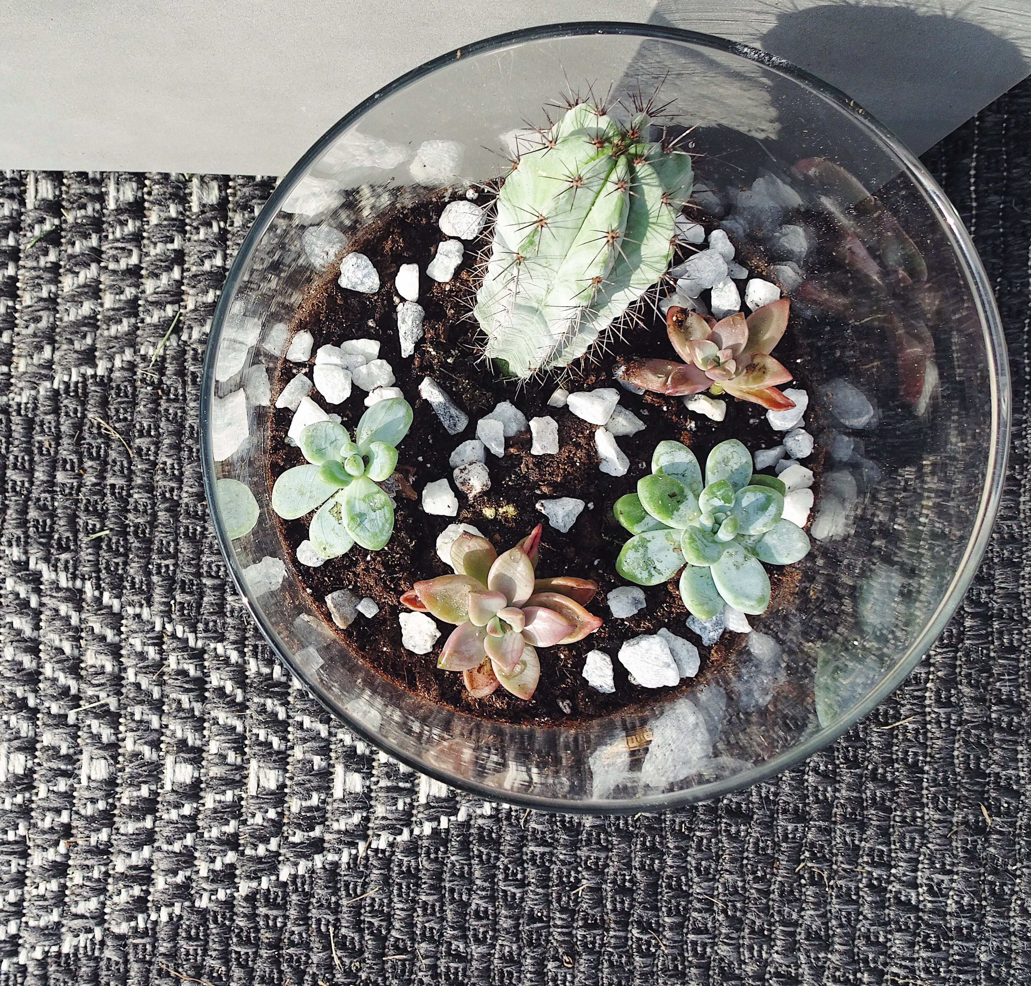 Succulents (With Images)