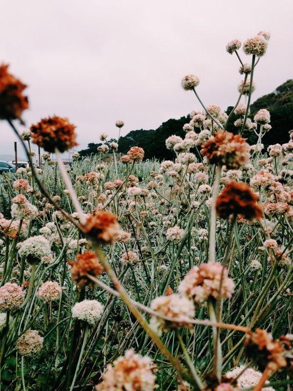 Wild Flowers Fiori Selvatici Sfondi Floreali Giardinaggio