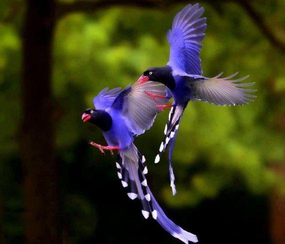 Top 89 des plus beaux oiseaux du monde tooply animaux - Images d animaux sauvages gratuites ...