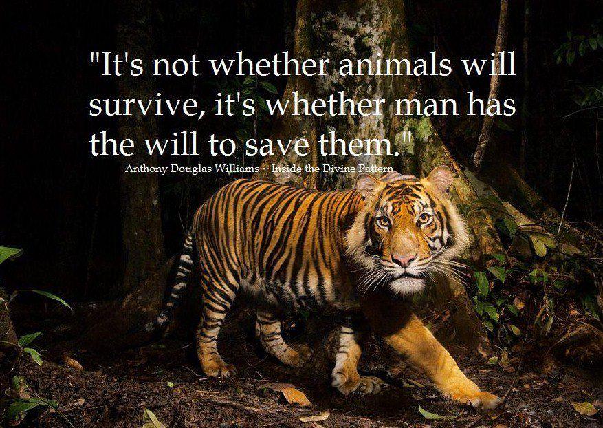 wild life quotes Google Search Tiger habitat, Tiger