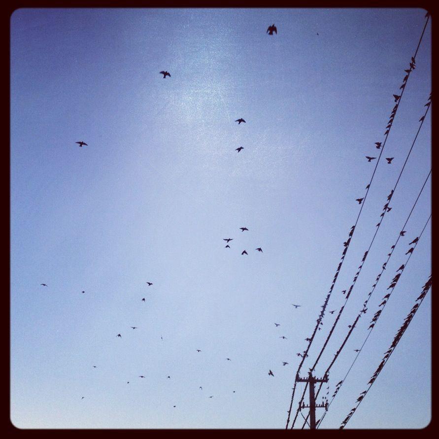 Birds signaling rain