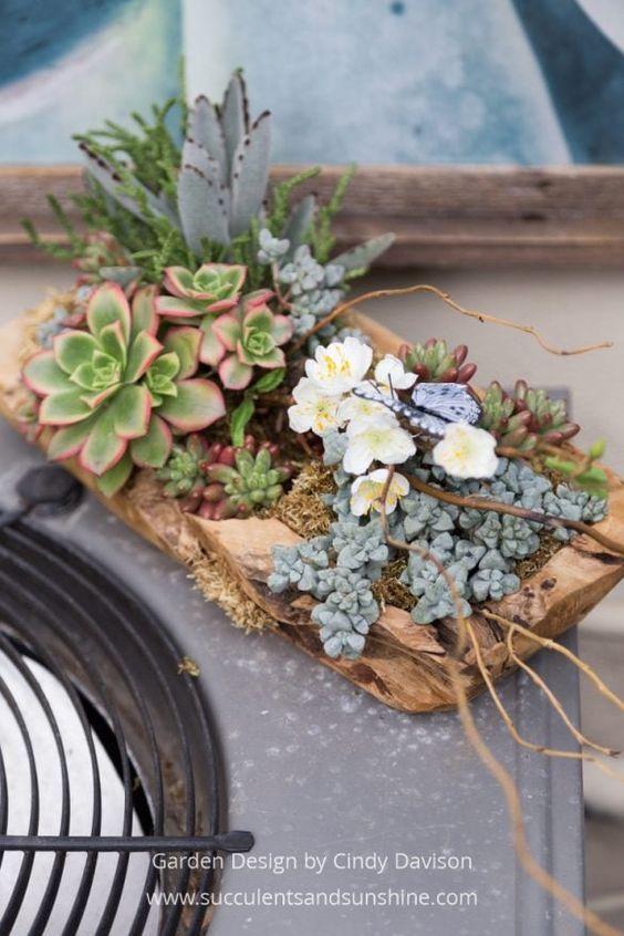 Small Succulent Garden for the Birds and Butterflies Suculentas - jardines con llantas