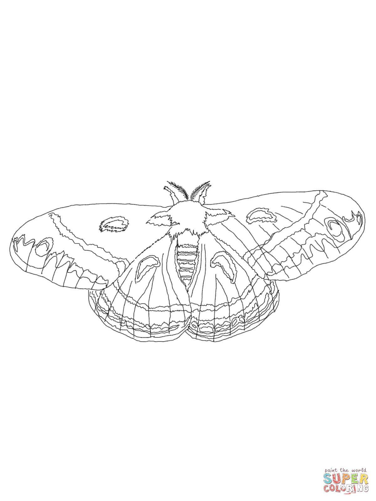 Cecropia Moth Coloring Page From Moth Category Select From 28264 Printable Crafts Of Cartoons Natu Cecropia Moth Coloring Pages Free Printable Coloring Pages