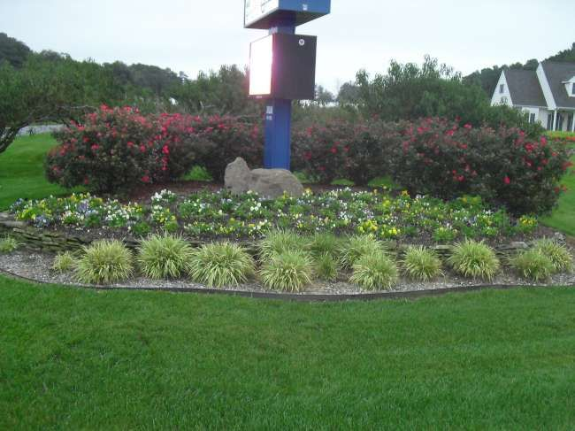 Annual Colors | RSC Landscaping