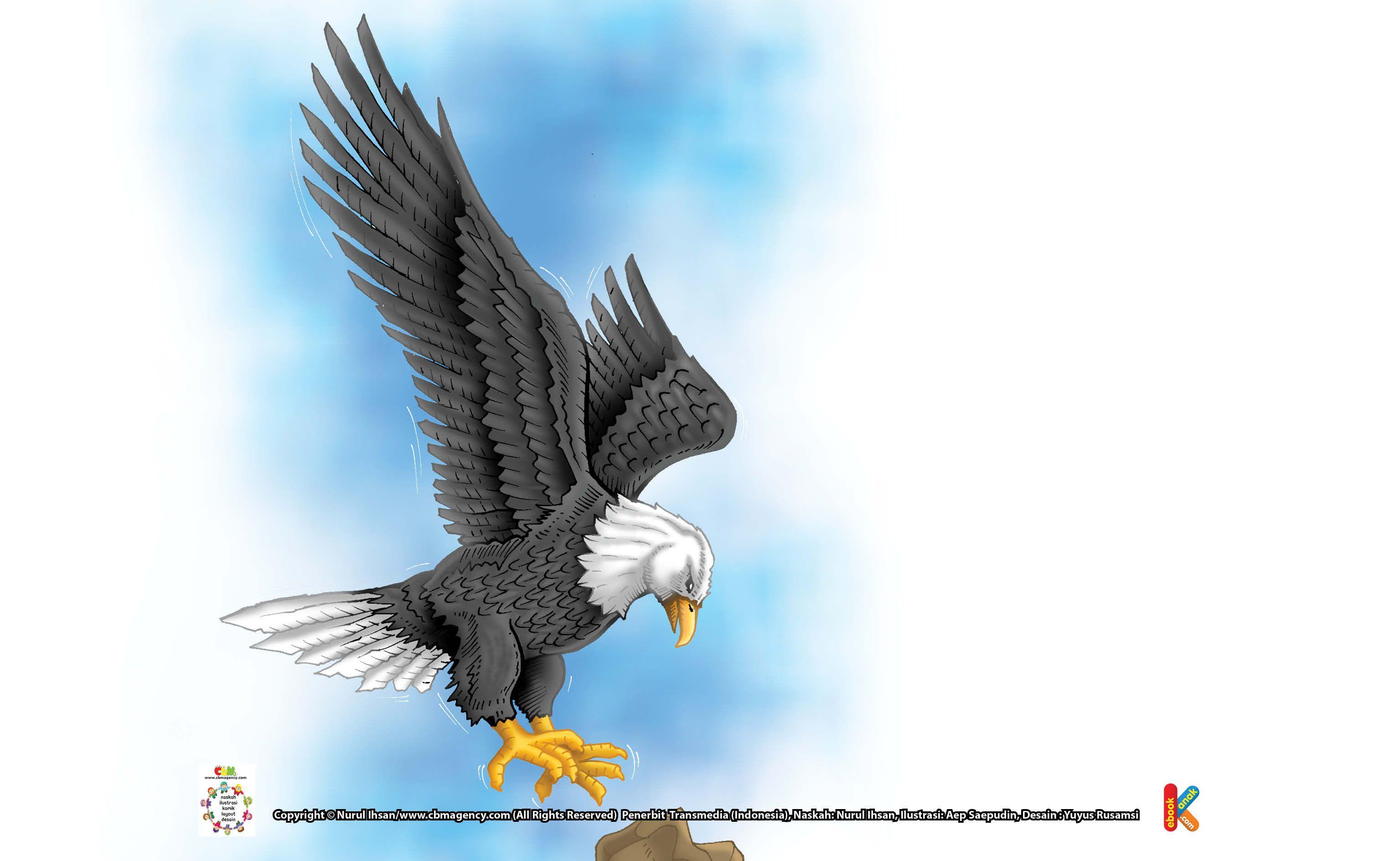 Burung Elang Kepala Putih Pemilik Sarang Burung Terbesar Dengan